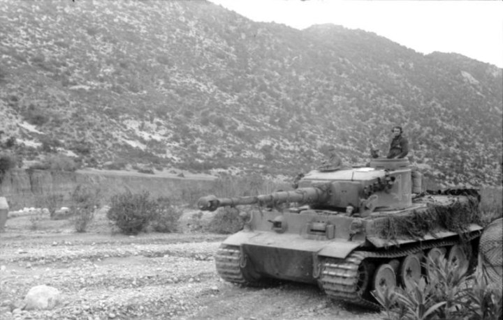 Tiger-Tunisia.jpg